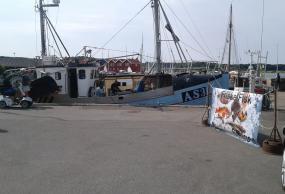 Havnens dag